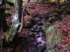 arroyo-con-hojas_1