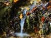 arroyo-con-hojas_2
