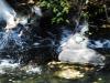 Patos del Bernesga, Gordón