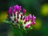 Flora de Gordón